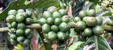 gcoffee-06